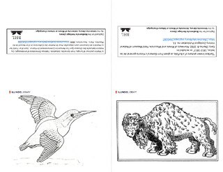 Notecards to color, European kingfisher and bison